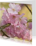 4k roze bloesem van prunusboom