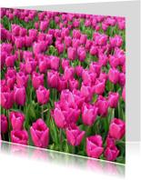 4K Roze Tulpen