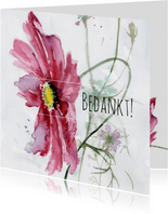 Bedankkaart, aquarel Cosmea