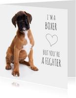 Beterschap - I'm a boxer
