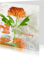 Beterschap oranje chrysant
