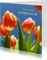 beterschapskaart tulpen II - LB