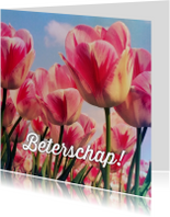 Beterschapskaart tulpen III - LB