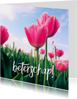 beterschapskaart tulpen V - LB