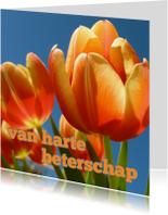 beterschapskaart tulpen VII -LB