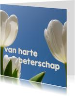 beterschapskaart tulpen VIII -LB