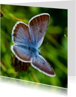 Blauwe vlinder 2