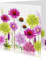 Bloemen chrysant zonnehoed