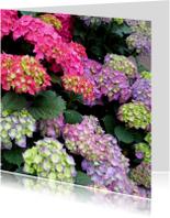 Bloemen Kleurige Hortensia s