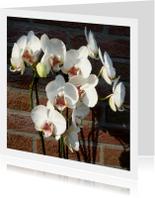 bloemen orchideetjes muurbloem