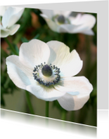 Bloemenkaarten - Bloemenkaart anemoon wit