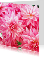 Bloemenkaart Dahlias