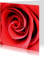 Bloemenkaart met prachtige roos