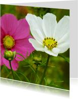 Bloemenkaart papaver