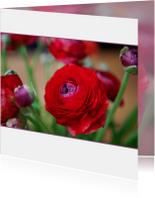 bloemenkaart ranonkel MM