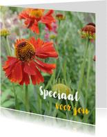 Bloemenkaart - Rode margriet