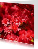 Bloemenkaart rode rhododendron