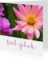 Bloemenkaart roze dahlia bloem