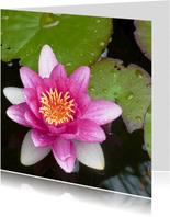 Bloemenkaart  roze waterlelie