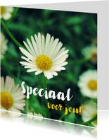 Bloemenkaart witte madeliefjes