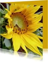 Bloemenkaart Zonnebloem 1 - OT