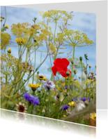 bloemenveldje met een klaproos