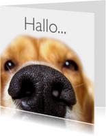 Close up van hond-isf