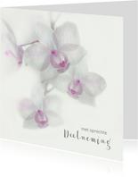 Condoleance met orchidee-paars-