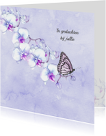 Condoleance orchidee vlinder
