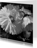 Condoleancekaart witte bloem dauwdruppels - SK