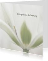 Deelneming met witte tulp