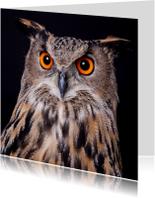 Dierenkaarten - Dieren kaart - Uil - Oehoe