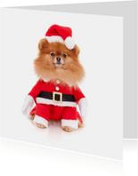 Dieren Kerstkaart - Pomeranian kerstman