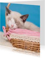 Dieren - Kitten slapend mandje