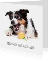 Verjaardagskaarten - Dieren Verjaardagskaart - Hap-py Birthday