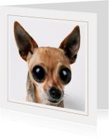 Dierenkaart Chihuahua