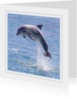 Dierenkaart Dolfijn