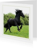 Dierenkaart Fries paard