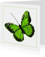 Dierenkaart groene vlinder