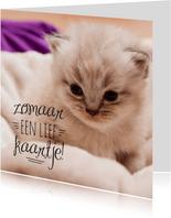 Dierenkaart kitten zomaar