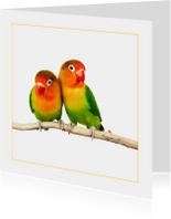 Dierenkaart Kleurige parkieten