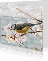 Dierenkaart lentebloesem - pimpelmees