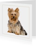 Dierenkaart Lief hondje met strikje