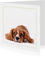 Dierenkaart Lief hondje