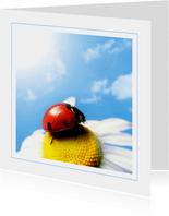 Dierenkaart lieveheersbeestje