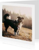 Dierenkaart met 1 grote foto