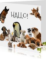 Dierenkaart met allemaal verschillende dieren
