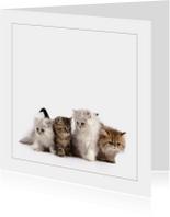 Dierenkaart met kittens