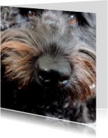 Dierenkaart natte neus Hond