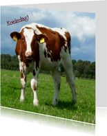 Dierenkaart nieuwsgierige koe